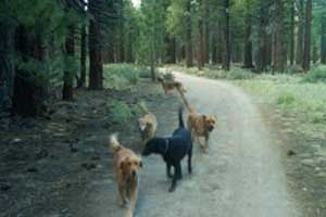 doggy day care in mammoth, california